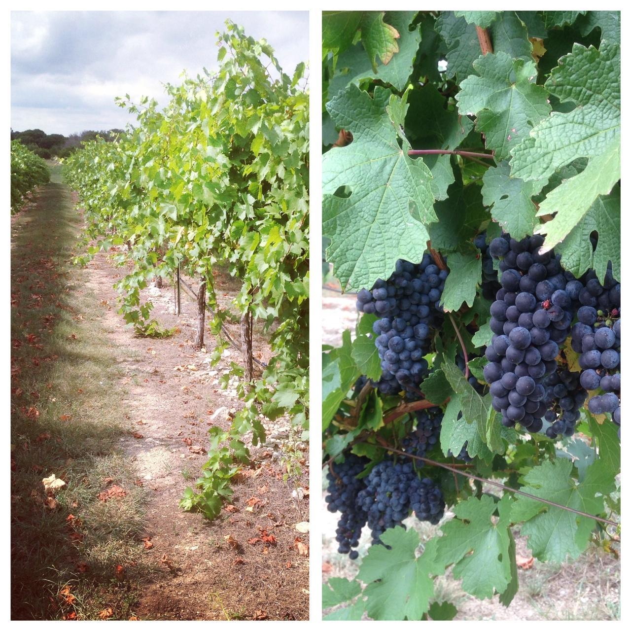 Red Caboose winery via dallasfoodnerd.com